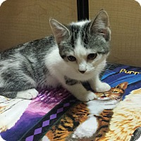 Adopt A Pet :: Nadine - Whittier, CA