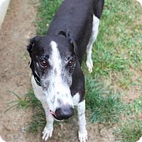Adopt A Pet :: Alfred - Randleman, NC