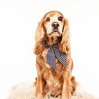 Adopt A Pet :: Fitz - Houston, TX