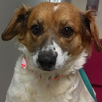 Adopt A Pet :: Tammie Wiggins - Seattle, WA