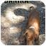 Photo 1 - Labrador Retriever Mix Puppy for adoption in Weeki Wachee, Florida - Danika