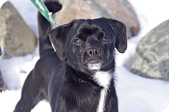 Terrier (Unknown Type, Small) Mix Dog for adoption in Elyria, Ohio - Louie