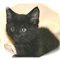 Adopt A Pet :: Charlie - Montgomery, IL