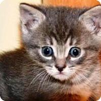 Adopt A Pet :: Buttercup - Pasadena, CA