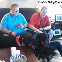 Adopt A Pet :: Louie - Darlington, MD