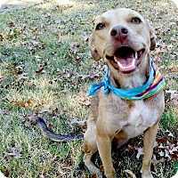 Adopt A Pet :: Bailey lovely girl, easy - Sacramento, CA