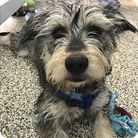 Adopt A Pet :: Spanky - Thousand Oaks, CA
