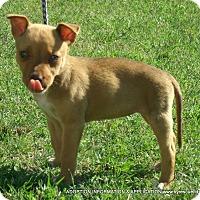 Adopt A Pet :: Hazel/ADOPTED - parissipany, NJ