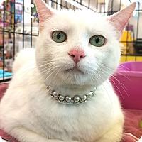 Adopt A Pet :: Bianca - E. Claridon, OH