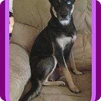 Adopt A Pet :: ZELDA - Manchester, NH