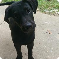 Adopt A Pet :: Sirius - Walker, LA