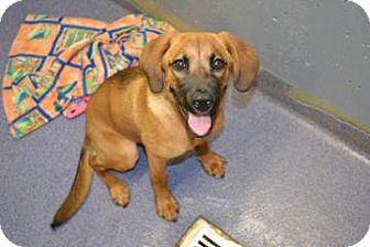 Hound (Unknown Type) Mix Dog for adoption in Edwardsville, Illinois - Mishka