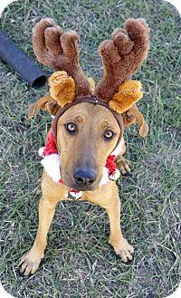 Labrador Retriever Mix Dog for adoption in Corpus Christi, Texas - Hazel