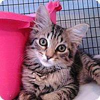 Adopt A Pet :: Izzy - Deerfield Beach, FL