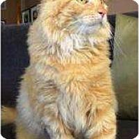 Adopt A Pet :: Mongo - Chicago, IL