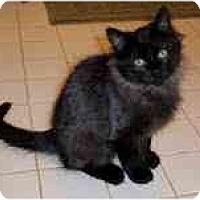 Adopt A Pet :: Cullen - Arlington, VA