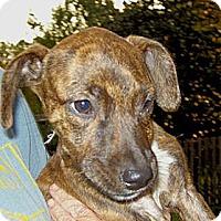 Adopt A Pet :: Eleanor (Ellie) - Hagerstown, MD