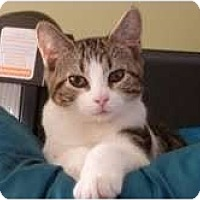 Adopt A Pet :: Matrix - Fredericton, NB