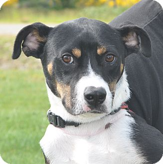 Retriever (Unknown Type) Mix Puppy for adoption in Tumwater, Washington - Sammy