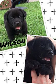 Cattle Dog Mix Puppy for adoption in Jacksonville, North Carolina - Wilson