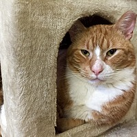 Adopt A Pet :: Eric - Wilmington, DE
