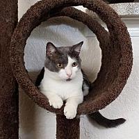 Adopt A Pet :: Tato - Apopka, FL