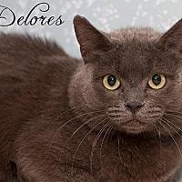 Adopt A Pet :: DELORES - Fall River, MA
