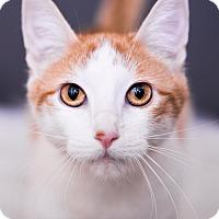 Adopt A Pet :: Joey - Warrenton, MO