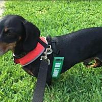 Adopt A Pet :: Dirks - Pearland, TX
