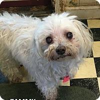Adopt A Pet :: Tammy (Lupa) - Wrightsville, PA