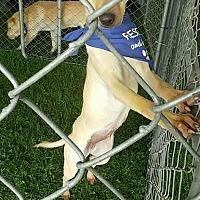 Adopt A Pet :: Fiona - Apple Valley, CA