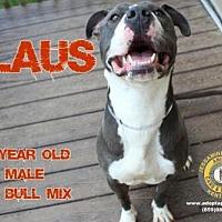 Adopt A Pet :: Klaus - Nicholasville, KY