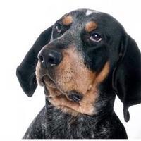 Adopt A Pet :: Corin *Trainee* - Glen Allen, VA