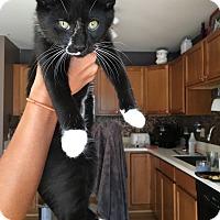 Adopt A Pet :: Oreo - Livonia, MI