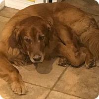 Adopt A Pet :: RJ - Denver, CO