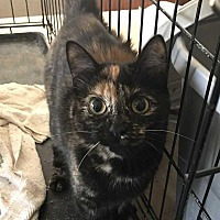 Adopt A Pet :: Cleo - Hanna CIty, IL