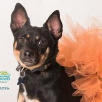 Adopt A Pet :: JESSICA - Camarillo, CA