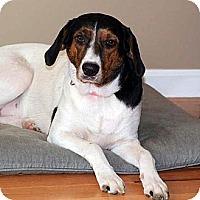 Adopt A Pet :: Alyssa - Byrdstown, TN