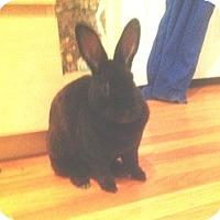 Adopt A Pet :: Rosie - Maple Shade, NJ