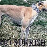 Adopt A Pet :: Rio Sunrise - Vidor, TX