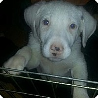 Adopt A Pet :: Oslo - Chicago, IL
