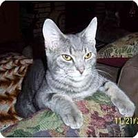 Adopt A Pet :: Grey - Cleveland, OH