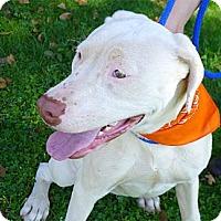 Adopt A Pet :: Freckles Urgent needs foster - Sacramento, CA