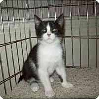 Adopt A Pet :: Dakota - Davis, CA