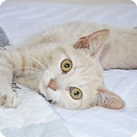 Adopt A Pet :: Alex - Xenia, OH