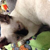 Adopt A Pet :: Sprite - San Ramon, CA