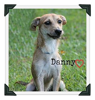 Labrador Retriever/Hound (Unknown Type) Mix Dog for adoption in Chester, Connecticut - Danny