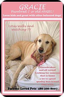 Labrador Retriever Dog for adoption in Cave Creek, Arizona - GRACIE