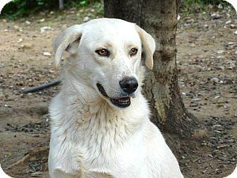 Labrador Retriever Mix Dog for adoption in Toronto, Ontario - August