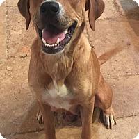 Adopt A Pet :: Nina - Scottsdale, AZ